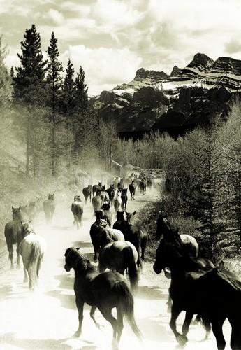 Bruno Engler - Bruno Engler - Horse Drive