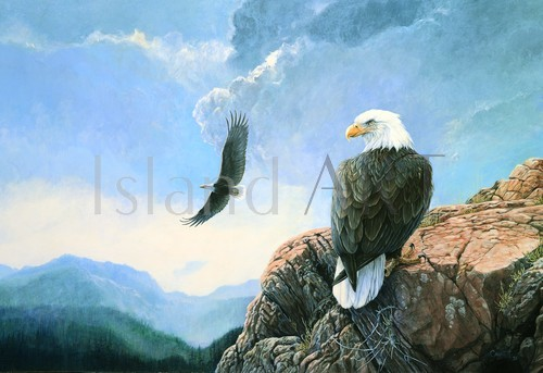 Lissa Calvert - Lissa Calvert - Bald Eagles