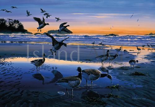 Mark Hobson - Mark Hobson - Black Brant Geese
