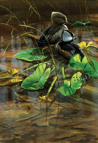 Mark Hobson - Mark Hobson - Hooded Mergansers Among Lily Pads