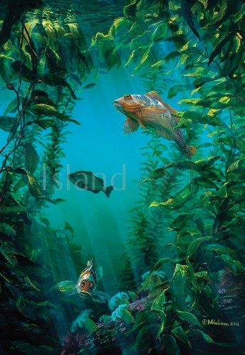 Mark Hobson - Mark Hobson - Rock Fish World #2