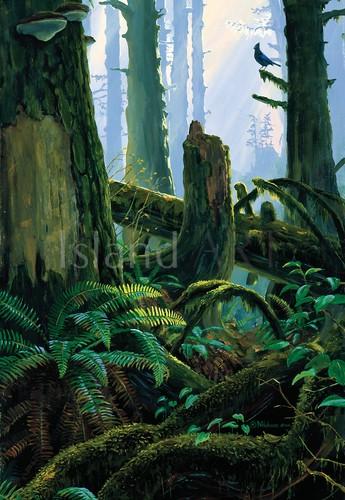 Mark Hobson - Mark Hobson - Steller's Jay in Rainforest