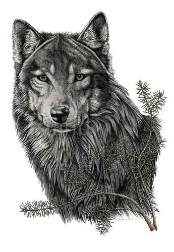 Stefanie Clark - Stefanie Clark - Timber Wolf